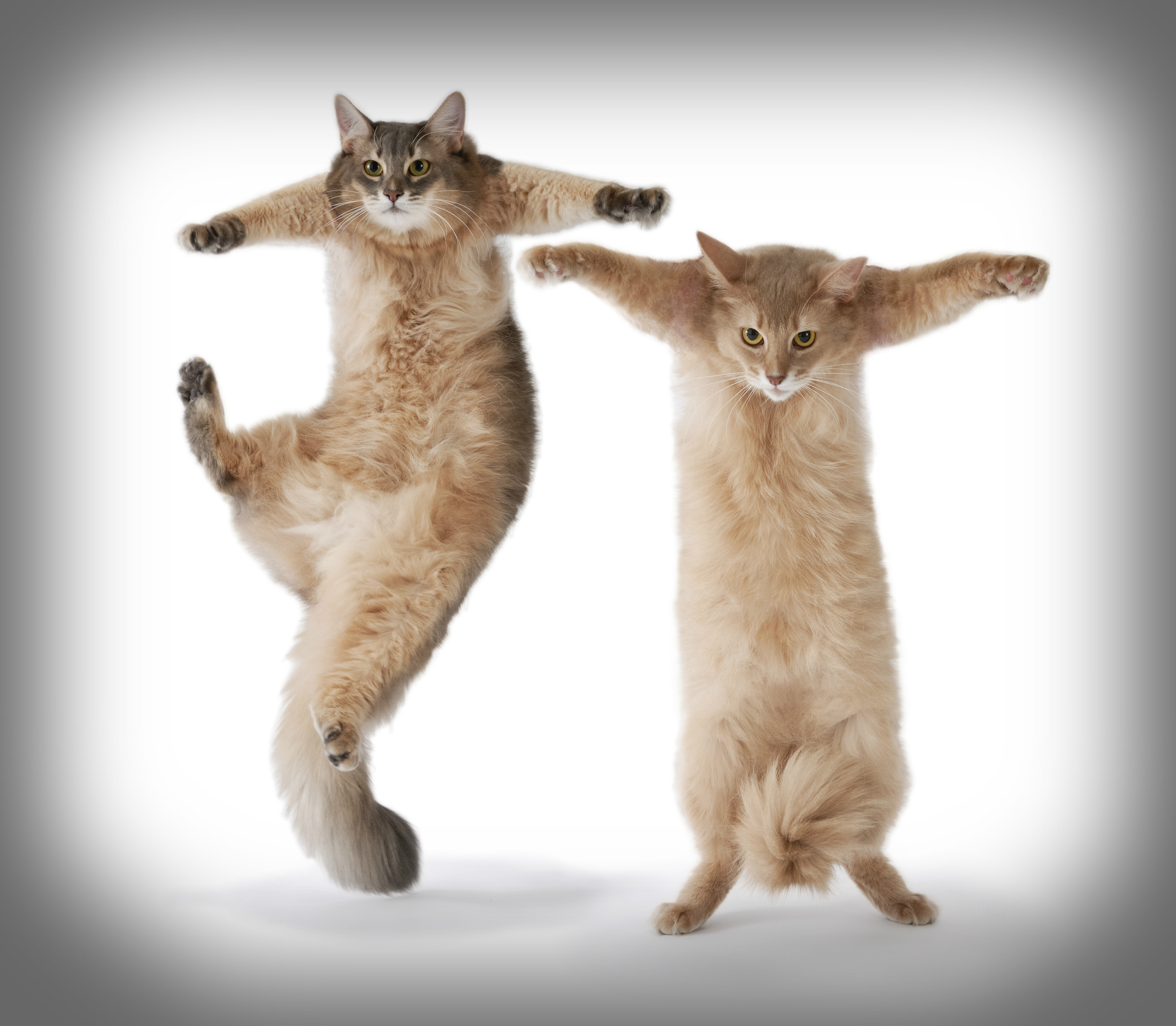 Dancing With Cats Video
